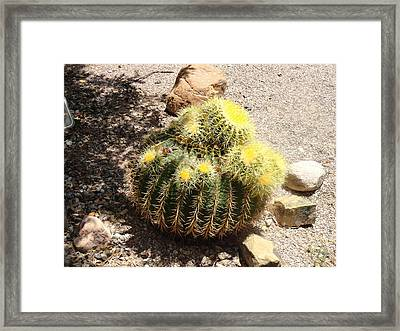Barrel Of Cactus Needles Framed Print