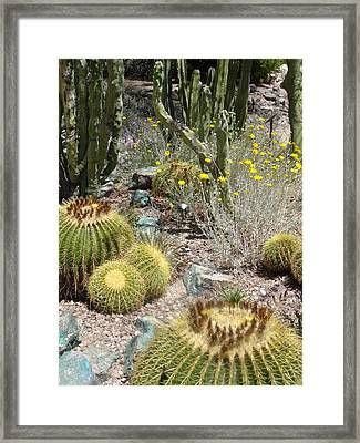 Barrels And Barrels Of Cactus Framed Print
