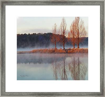 Barren, Beautiful Trees Framed Print
