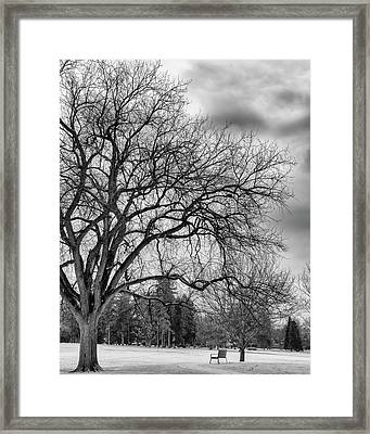 Winter In Cheesman Park, Denver, Co Empty Trees And Empty Benches Framed Print