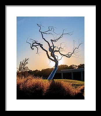 Barren Tree Framed Prints