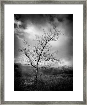 Barren Tree 1 Framed Print