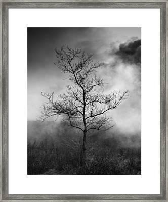 Barren Tree 2 Framed Print by Joseph Smith