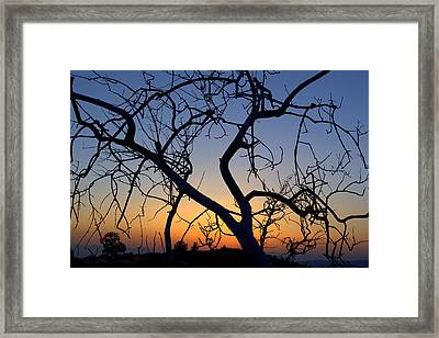 Framed Print featuring the photograph Barren Tree At Sunset by Lori Seaman