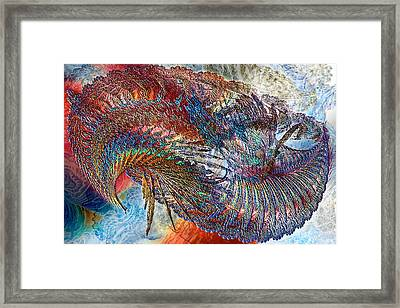 Reef #2 Framed Print by Chas Hauxby