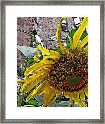 Barrio Sunflower 3 Framed Print