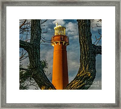 Framed Print featuring the photograph Barrny Thru The Trees by Nick Zelinsky