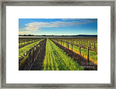 Barrossa Vineyard Sunrise Framed Print by Mike Dawson