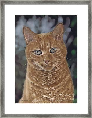 Barry The Cat Framed Print