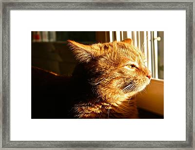 Bart The Cat Framed Print by Robert Joseph