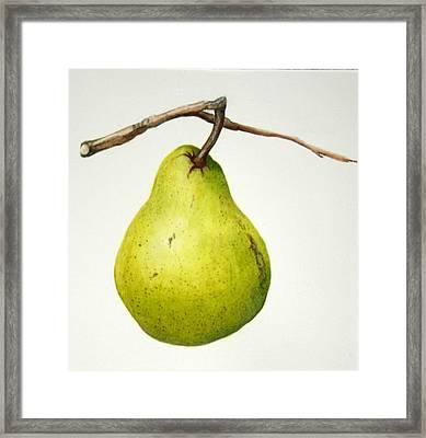 Bartlett Pear Framed Print