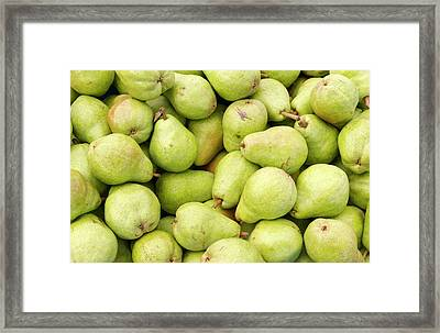 Bartlett Pears Framed Print by John Trax