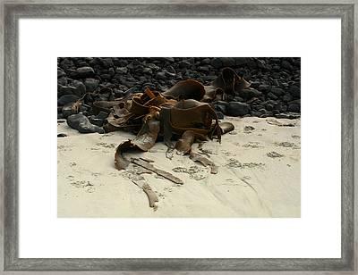 Basalt And Kelp Framed Print by Terry Perham