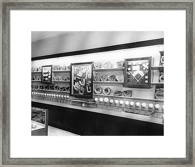 Baseball Memories On Display Framed Print by Underwood Archives