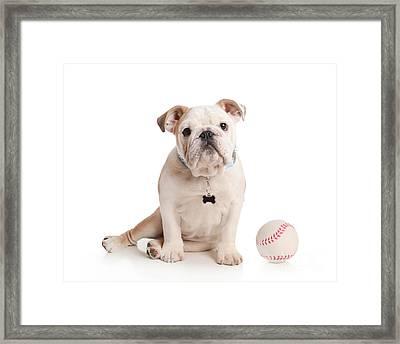 Baseball Pup Framed Print