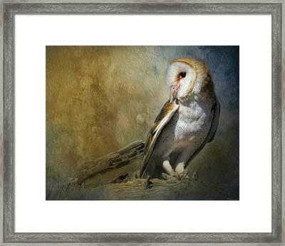 Bashful Barn Owl Framed Print by Teresa Wilson