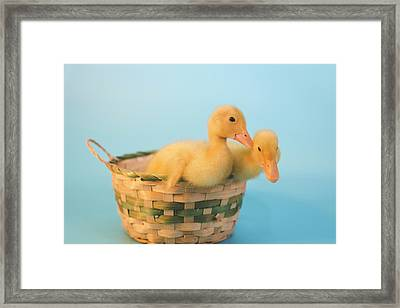 Basket Of Fun Framed Print