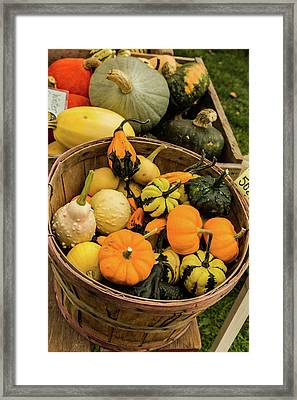 Basket Of Gourds Framed Print