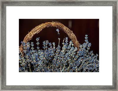 Basket With Lavender Flowers Framed Print