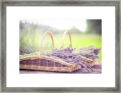 Baskets Of Lavender Framed Print