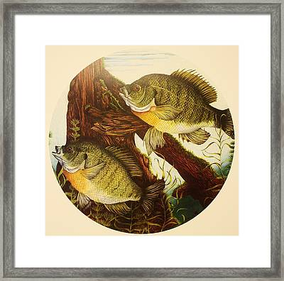 Basking Bluegills Framed Print by Bruce Bley