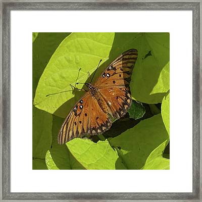 Framed Print featuring the photograph Basking Butterfly by Michael Flood