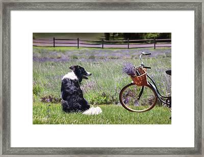 Basking In Lavender Framed Print by Lori Deiter