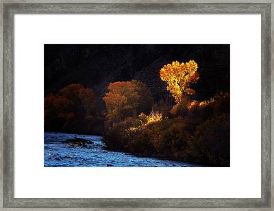 Framed Print featuring the photograph Basking In The Light by Andrew Soundarajan
