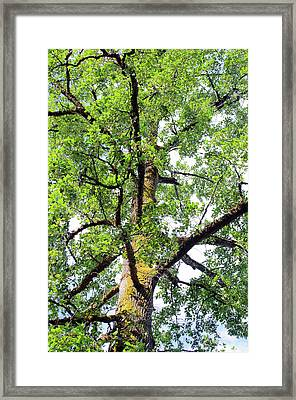 Framed Print featuring the photograph Basking In The Light Of The Lord by Tikvah's Hope
