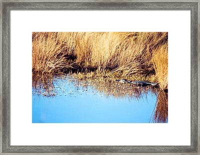 Basking In The Sun Framed Print by Jan Amiss Photography