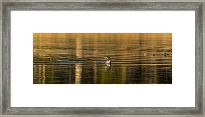 Framed Print featuring the photograph Basking In The Sunset Light by Yeates Photography
