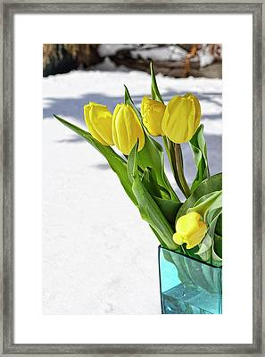 Framed Print featuring the photograph Basking In The Sunshine by Traci Cottingham