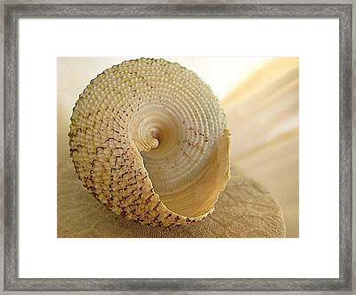 Basking Seashell Framed Print