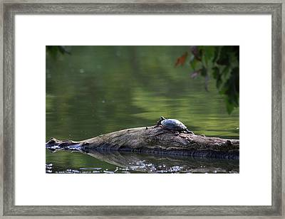 Framed Print featuring the photograph Basking Turtle by Lyle Hatch