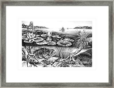 Bass And Crappie Framed Print