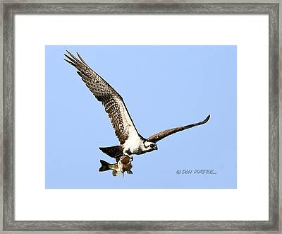 Bass Master 1 Framed Print by Don Durfee
