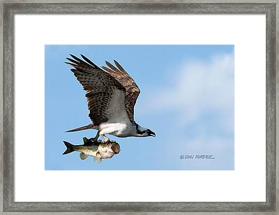 Bass Master 4 Framed Print by Don Durfee