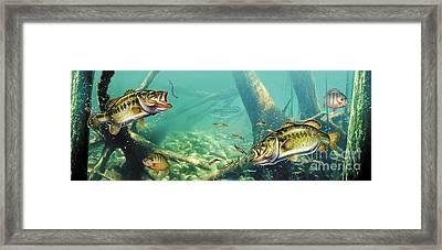 Bass Pond Framed Print