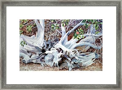 Bass River Cedar Stump Framed Print by Karol Wyckoff