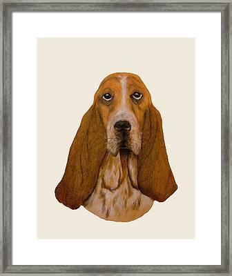 Basset Hound Portrait Framed Print by John Stuart Webbstock