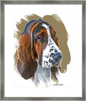 Bassett Hound Framed Print by Larry Linton