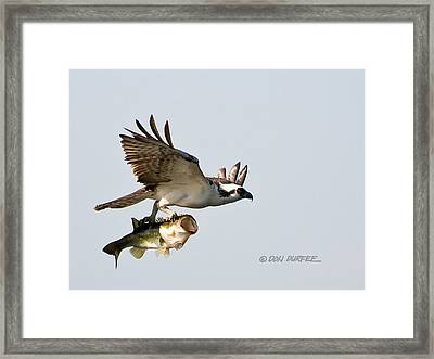 Framed Print featuring the photograph Bassmaster 2 by Don Durfee