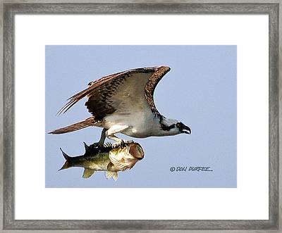 Framed Print featuring the photograph Bassmaster 3 by Don Durfee