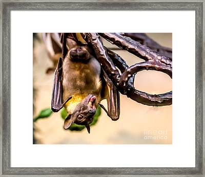 Bat Gobbling Apple Framed Print
