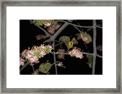 Framed Print featuring the photograph Bat by Jim Walls PhotoArtist