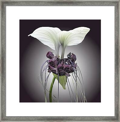 Bat Plant Framed Print