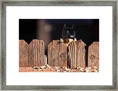 Bat Squirrel  The Cape Crusader Known For Putting Away Nuts.  Framed Print by James BO  Insogna