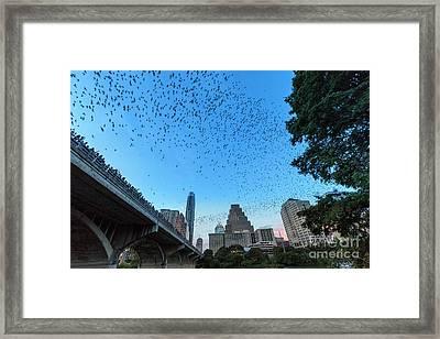 Bat Watchers Line Congress Bridge As The Austin Skyline Erupts With Streams Of Mexican Freetail Bats Framed Print