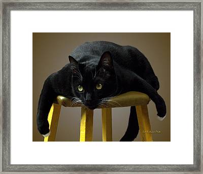Batcat Framed Print by Tom Buchanan