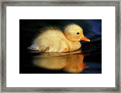 Bath Duckie Framed Print by Roeselien Raimond